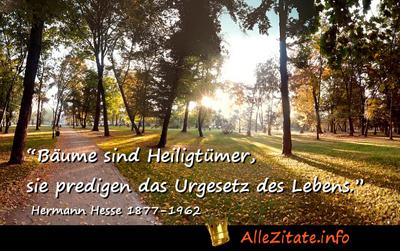Hermann hesse zitate bäume